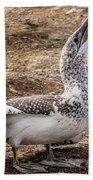 Gannet Chick 1 Beach Towel