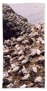 Gannet Cliffs Beach Towel