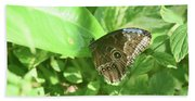 Garden With A Blue Morpho Butterfly With Wings Closed Beach Towel