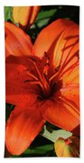 Garden With Lily Buds And A Blooming Orange Lily Beach Towel