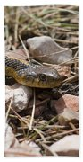 Garter Snake On The Trail In The Pike National Forest Of Colorad Beach Towel
