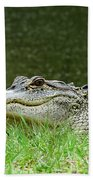 Gator 65 Beach Towel