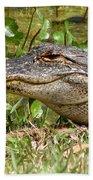 Gator Beach Sheet