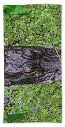 Gator Rising Beach Towel