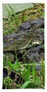 Gators 11 Beach Towel