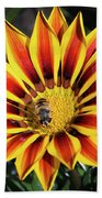Gazania With Insect Beach Towel