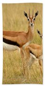 Gazelle Mother And Child Beach Towel
