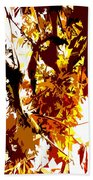 Gazing Into The Autumn Trees Beach Towel