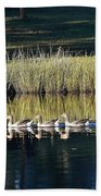 Geese Mother And Young Beach Towel