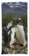 Gentoo Penguin And Young Chicks Beach Towel by Suzi Eszterhas
