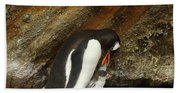 Gentoo Penguin Feeding Chicks Beach Towel