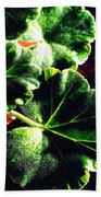 Geranium Leaves Beach Towel