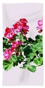 Geraniums In A Row Beach Towel
