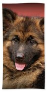 German Shepherd Puppy - Queena Beach Towel