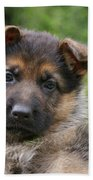 German Shepherd Puppy IIi Beach Towel by Sandy Keeton