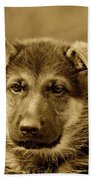 German Shepherd Puppy In Sepia Beach Towel