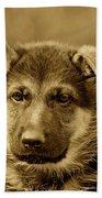 German Shepherd Puppy In Sepia Beach Sheet