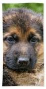 German Shepherd Puppy Beach Towel