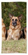 German Shepherds - Family Portrait Beach Towel