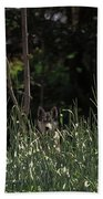 Ghost Wolf Beach Towel by DigiArt Diaries by Vicky B Fuller