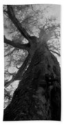 Ghostly Tree Beach Towel