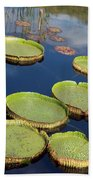 Giant Lily Pads Beach Towel
