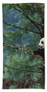 Giant Panda Ailuropoda Melanoleuca Beach Towel by Cyril Ruoso