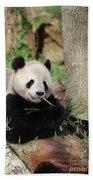 Giant Panda Bear Lounging On Against Tree Trunk Beach Towel