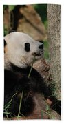 Giant Panda Bear Sitting Up Leaning Against A Tree Beach Towel