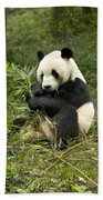 Giant Panda Eating Bamboo Beach Towel