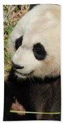 Giant Panda Feeding Himself Shoots Of Bamboo  Beach Towel