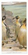 Giant Penguins, C1900 Beach Towel