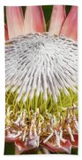 Giant Pink King Protea Flower Beach Towel