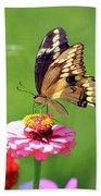 Giant Swallowtail Butterfly On Pink Zinnia Beach Towel