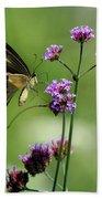 Giant Swallowtail Butterfly On Verbena Beach Towel