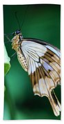 Giant Swallowtail Beach Towel