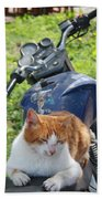 Ginger And White Tabby Cat Sunbathing On A Motorcycle Beach Towel