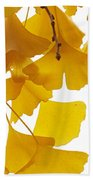 Ginkgo Ginkgo Biloba Leaves In Autumn Beach Towel