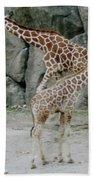 Giraffe And Baby  Beach Towel