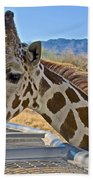 Giraffe At Feeding Station In Living Desert Zoo And Gardens In Palm Desert-california Beach Towel