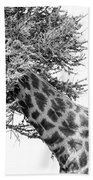 Giraffe Hide And Seek Beach Towel
