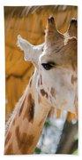 Giraffe In The Zoo. Beach Towel