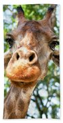 Giraffe Interest Beach Towel
