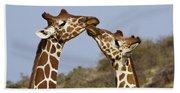 Giraffe Kisses Beach Sheet