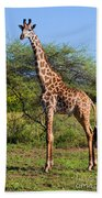 Giraffe On Savanna. Safari In Serengeti Beach Towel