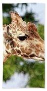 Giraffe Portrait Beach Towel