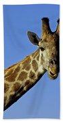 Giraffe With Oxpeckers Beach Towel