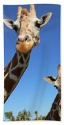 Giraffes Beach Towel