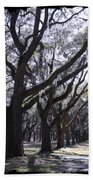 Glorious Live Oaks With Framing Beach Towel