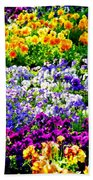 Glorious Pansies Beach Towel